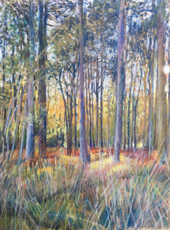 Pinsley Woods, Coloured Pencils, 16x12 cm £80