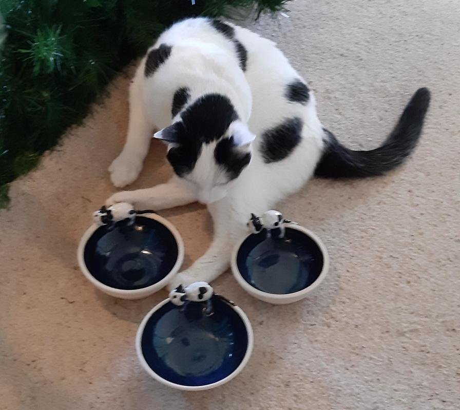 Squeakles cat with her personalised food bowls
