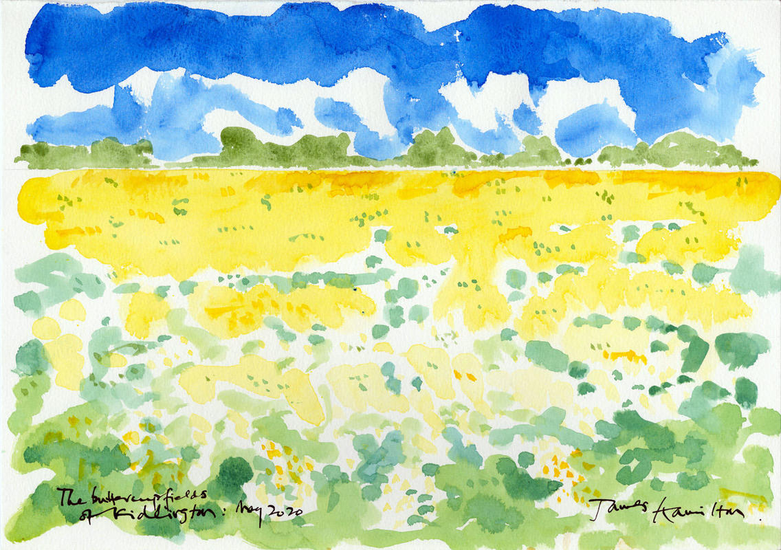 The Buttercup Fields of Kidlington, May 2020