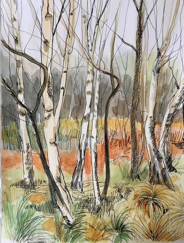Birches, pen and watercolour on paper