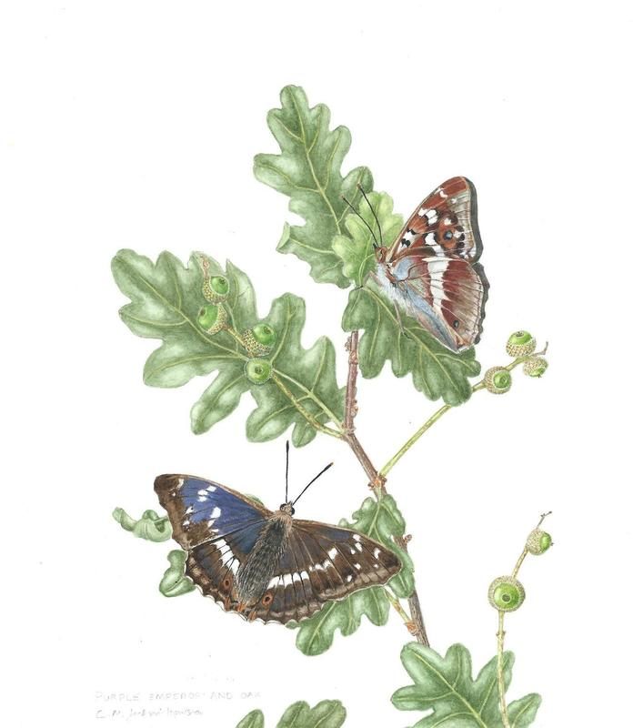 """Framed watercolour painting of butterflies on tree used for display. 12"""" h x 10"""" w. £190"""