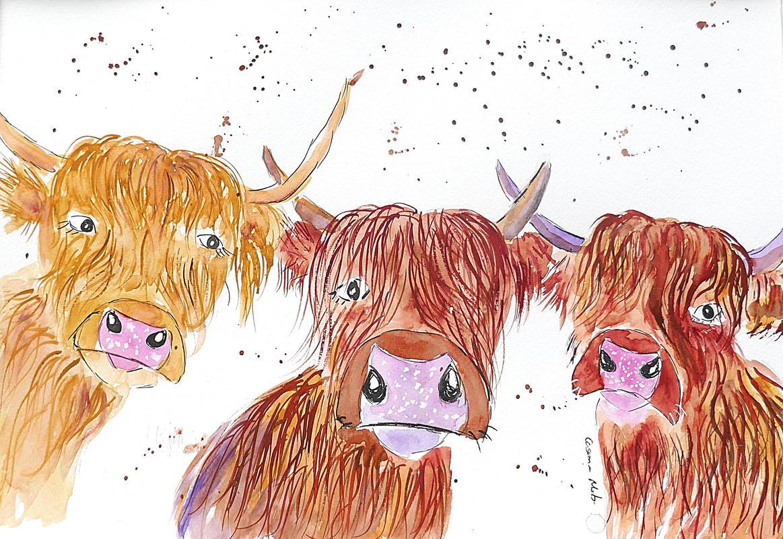 Three Cheeky Highland Cows