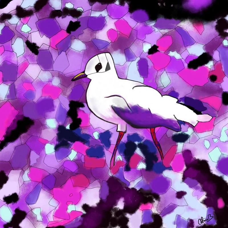 Seagull. Digital art print. 20x20cm