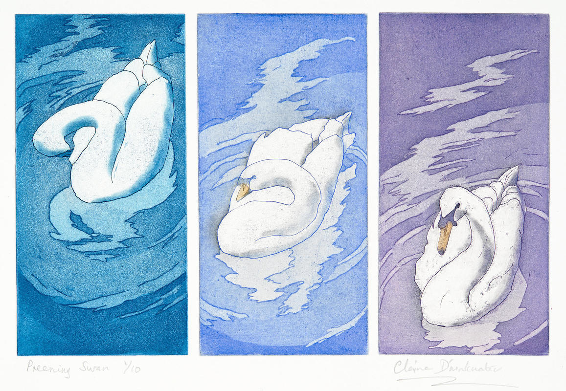 Preening Swans by Claire Drinkwater