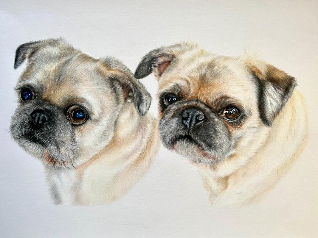 Mabel & Hebe - A3 colour pencil portrait