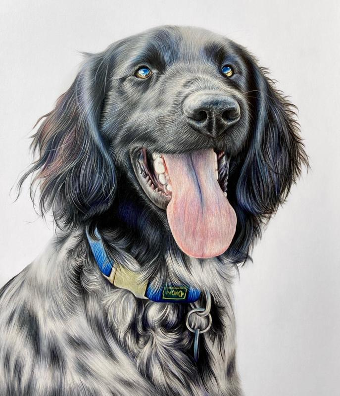 Oscar - A3 colour pencil portrait