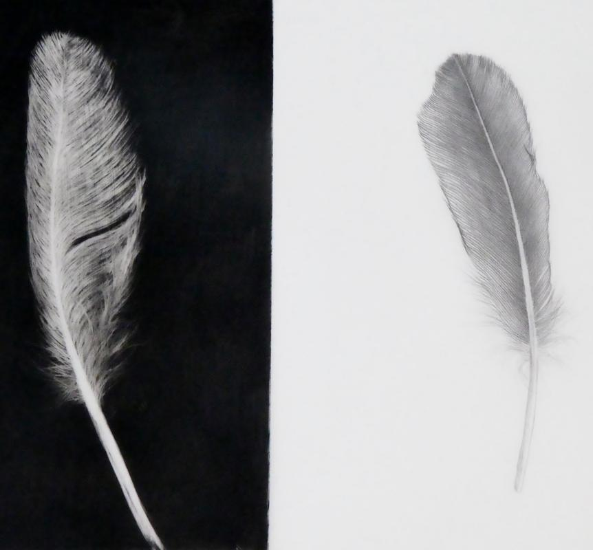 Feather Light (conte on drafting film)