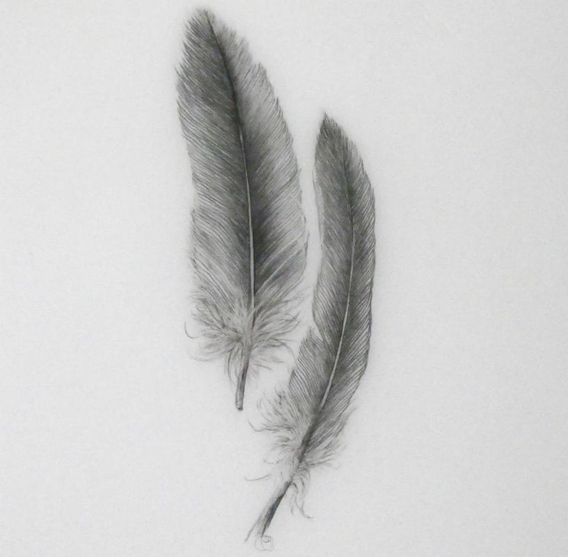Feather Light 2 (conte on drafting film)