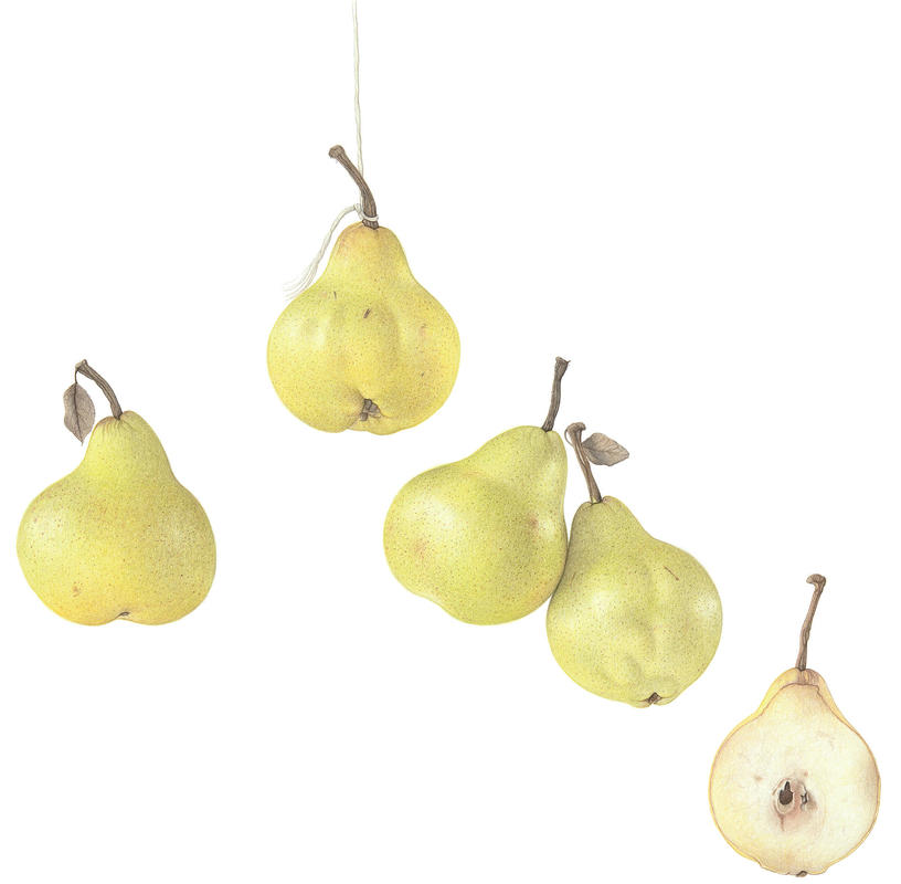 Italian pears, but which?