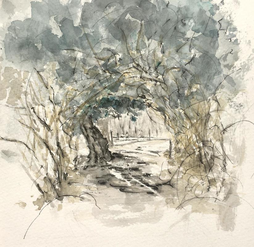 Holm Oak and brambles, Port Meadow
