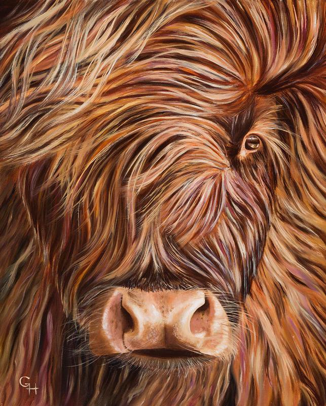 Highland Cow, oil on canvas, 24x30 cms, £80
