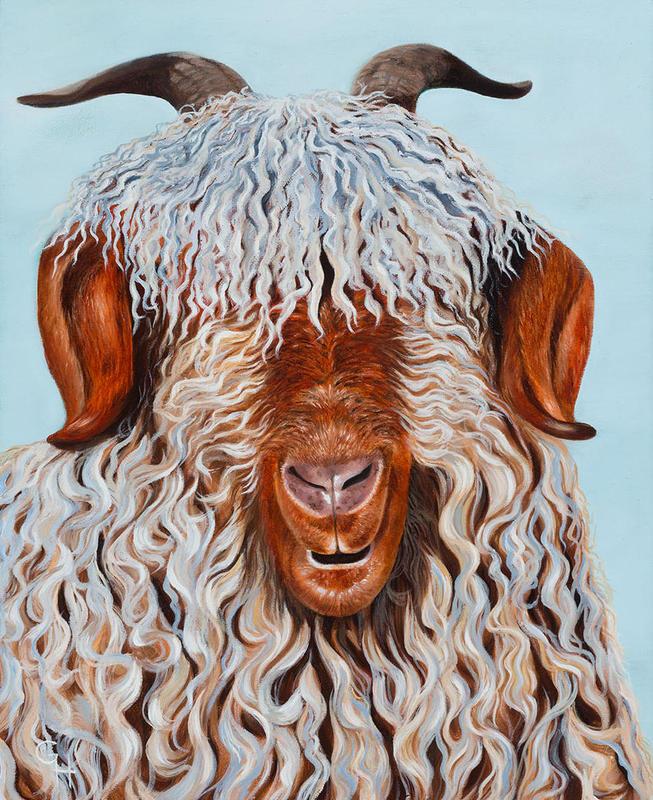 Angora Goat, oil on canvas, 24x30 cms, £80