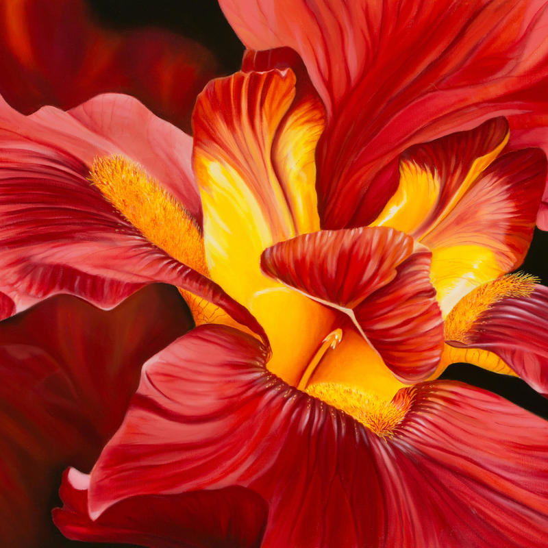 Red Iris, oil on board, 72x52cms (framed), £220