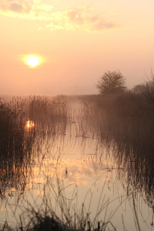 Dawn at Otmoor