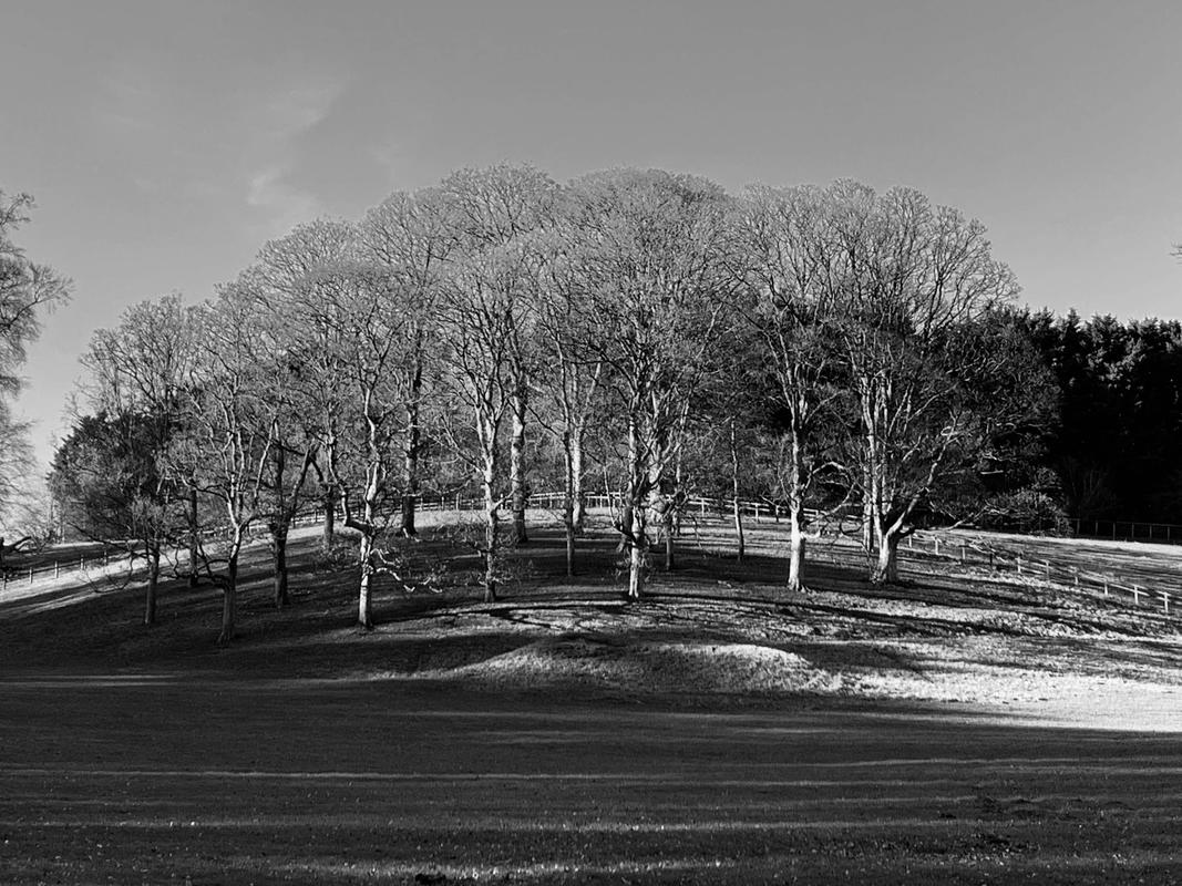 Blenheim Clumps, Black and White photograph