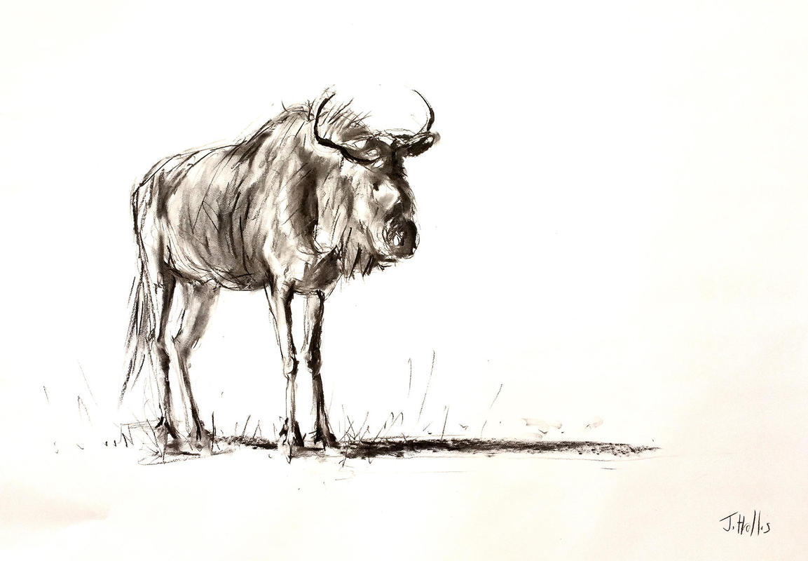 Blue Wildebeest Charcoal