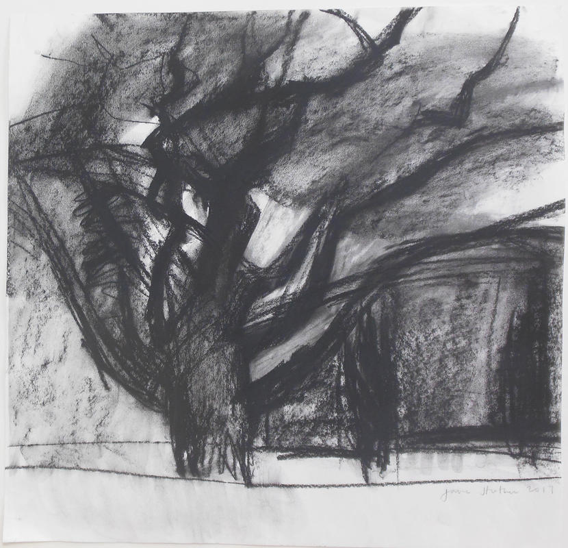Big Tree, Charcoal on paper, unframed