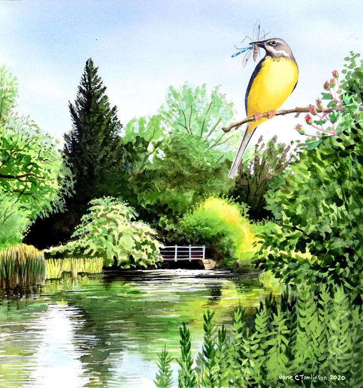 Grey Wagtail by the Windrush by Jane Tomlinson - watercolour & inks - size 352mm x 375mm - original £215