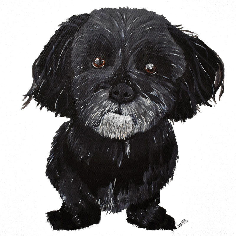 Mr Woo.  Mr Woo was my very first pet portrait where my friend let me paint his adorable side kick, Mr Woo the haveneese dog. Prints available from £35, greetings cards £3
