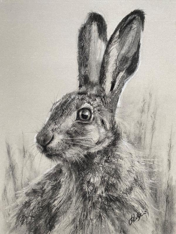 Jo Lillywhite 'Hare Alert' £150  charcoal drawing on paper