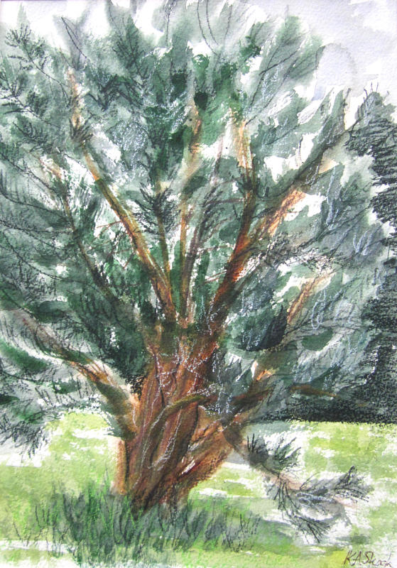Summer Pine - Watercolour and mixed media 21 x 30 cm - £85
