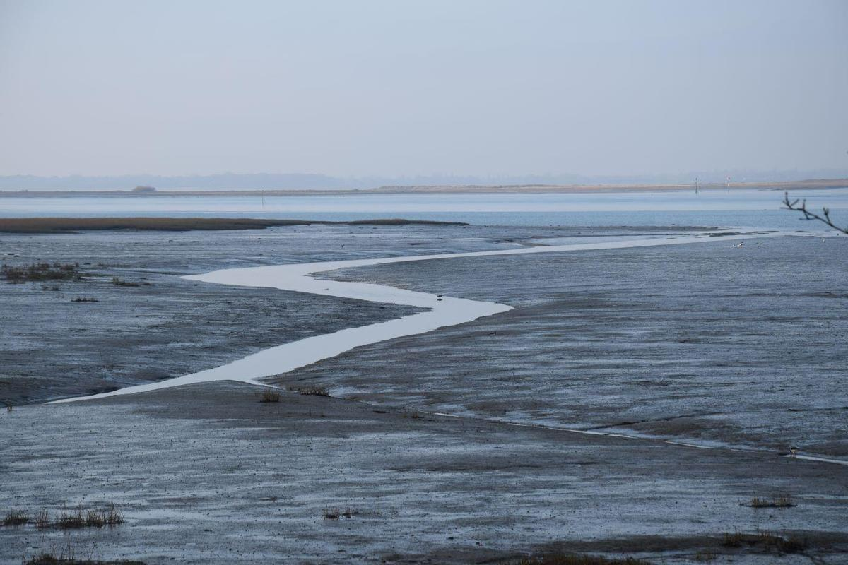 Chichester Harbour at Low Tide (Edward Bradley)