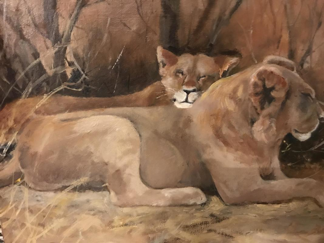 A couple of Lion napping