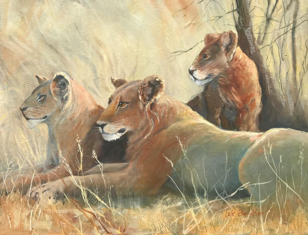 A lazy group of Young Lions after a Good Lunch