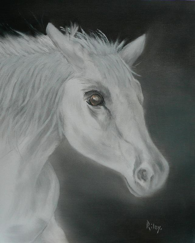 White Stallion    Oil on Box Frame 50x40cm