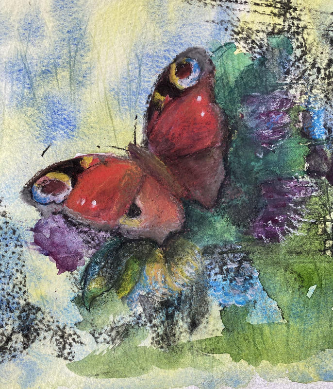 Peacock Butterfly, watercolour, 17 x 17cms, £150