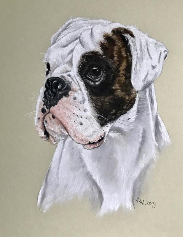 'Jed' one of my commissioned pastel portraits of a very handsome young Boxer Dog, pastel commissions start at £250 for an A4 portrait