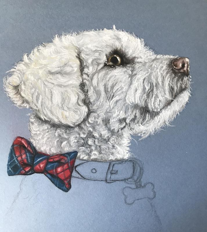 This is Alfie, in his very own Birthday Collar, a work in progress at the moment. Hasn't he the most endearing face and the first Poodle-Chon I've been asked to draw.