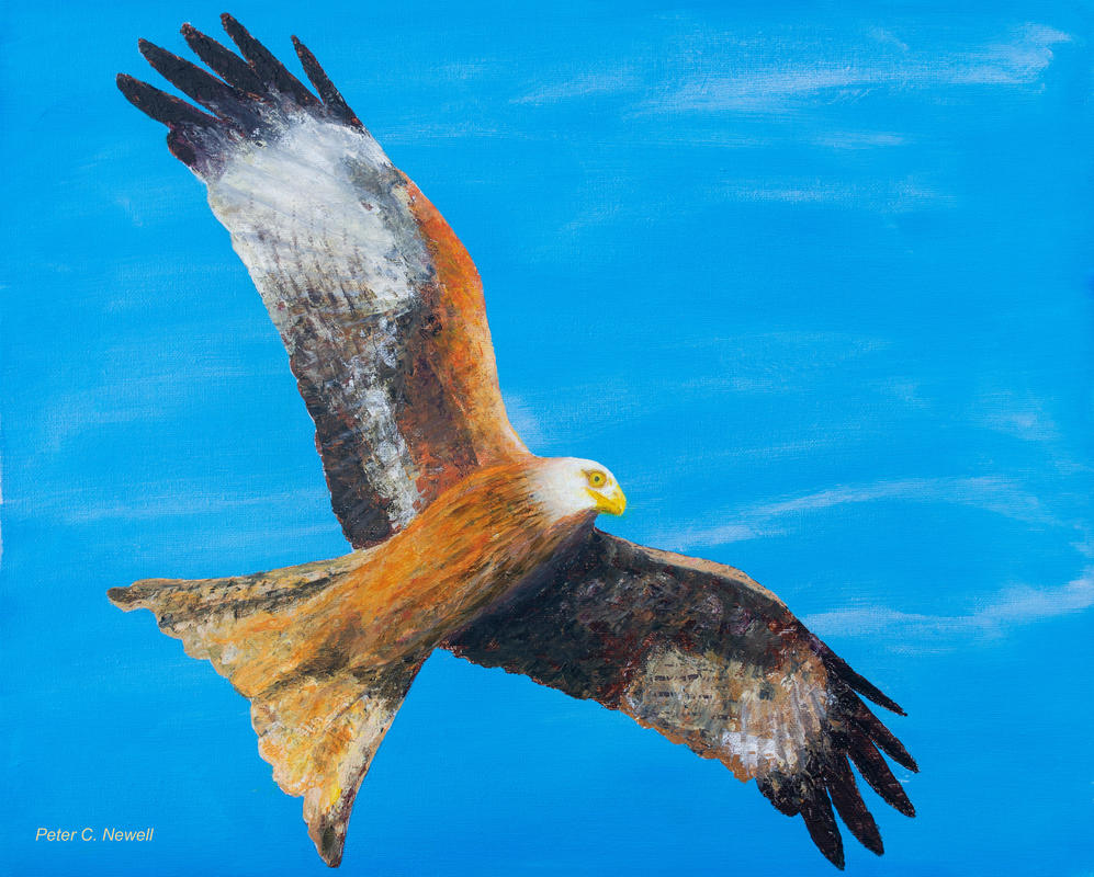 Red Kite (Acrylics using palette knives)