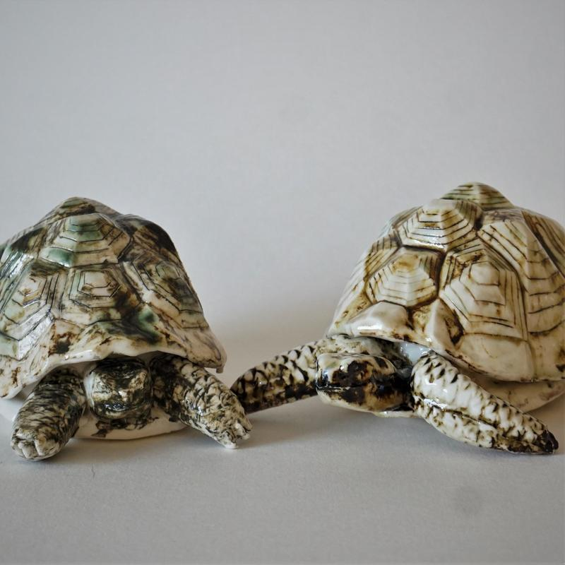 Madagascan tortoise with a box under the shell. £45
