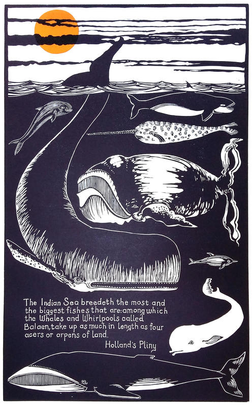 Whales and Whirlpools