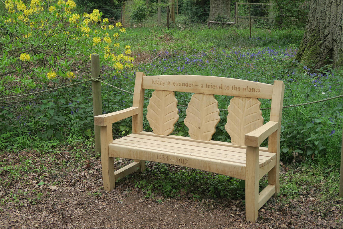Oak Goosey bench with beech leaves Oxford Arboretum