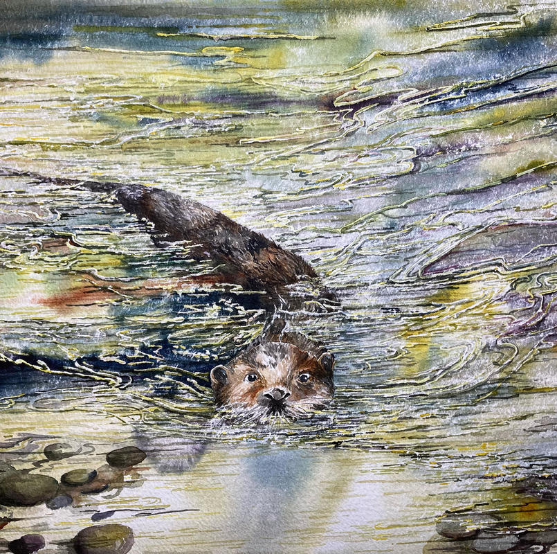 Swimming Otter.  Watercolour.  51 x 41 cms. Framed.  £325