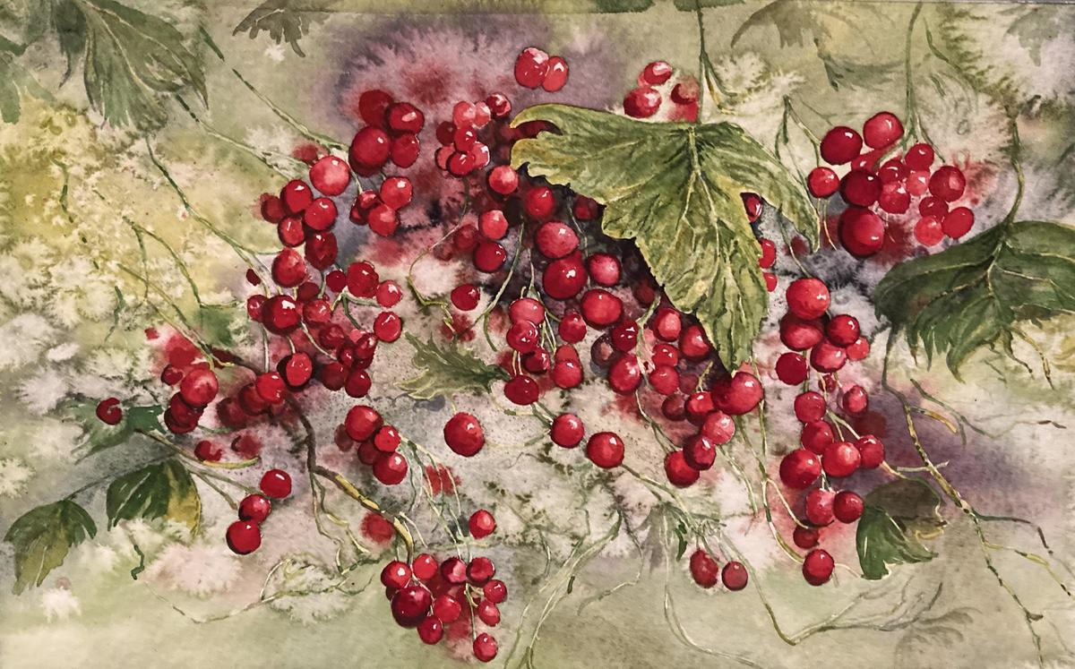Red currants. Watercolour.  26 x 19 cms unframed.  £125