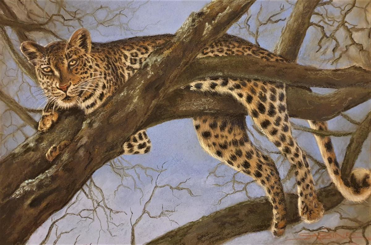 Leopard in Tree, pastel, 63 x 42cm, £350