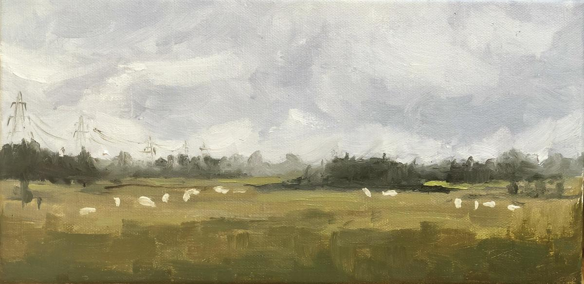 'Field of sheep on an overcast day' – Cotswolds