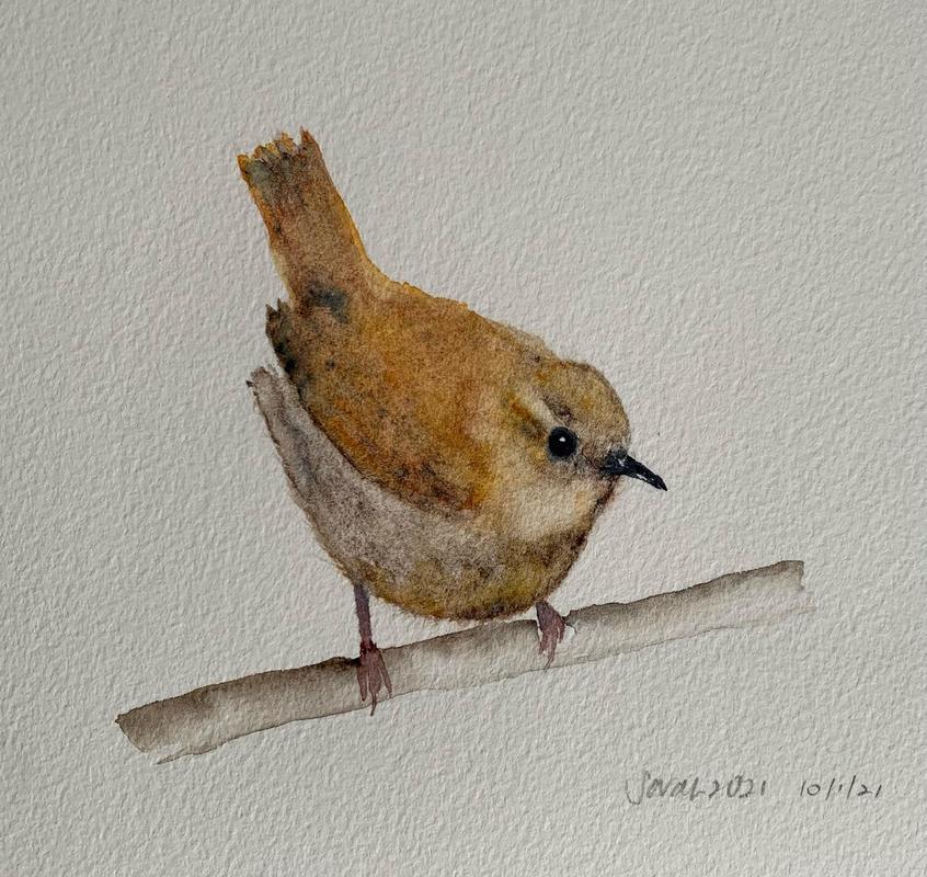 Wren * Watercolour on paper