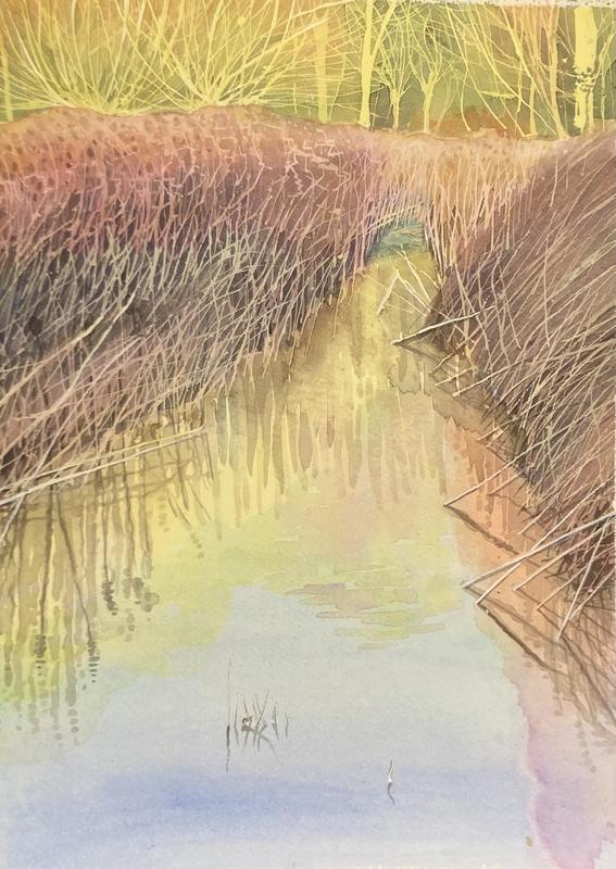 floods, teasels, morning sun, watercolour 32x40cm