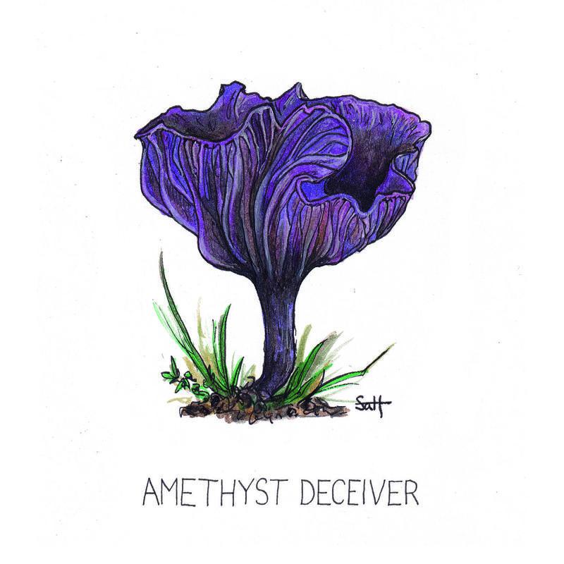 Pen & Ink Amethyst Deceiver Illustration - 15cm x 15cm - £25 (unframed) - £32.50 (framed)