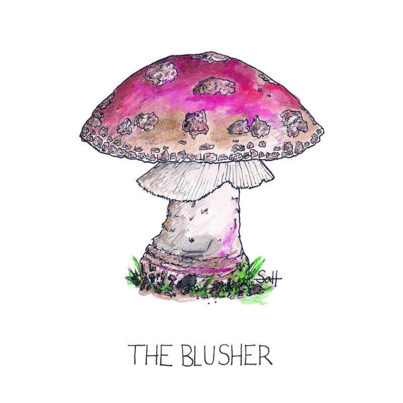 Pen & Ink The Blusher Illustration - 15cm x 15cm - £25 (unframed) - £32.50 (framed)