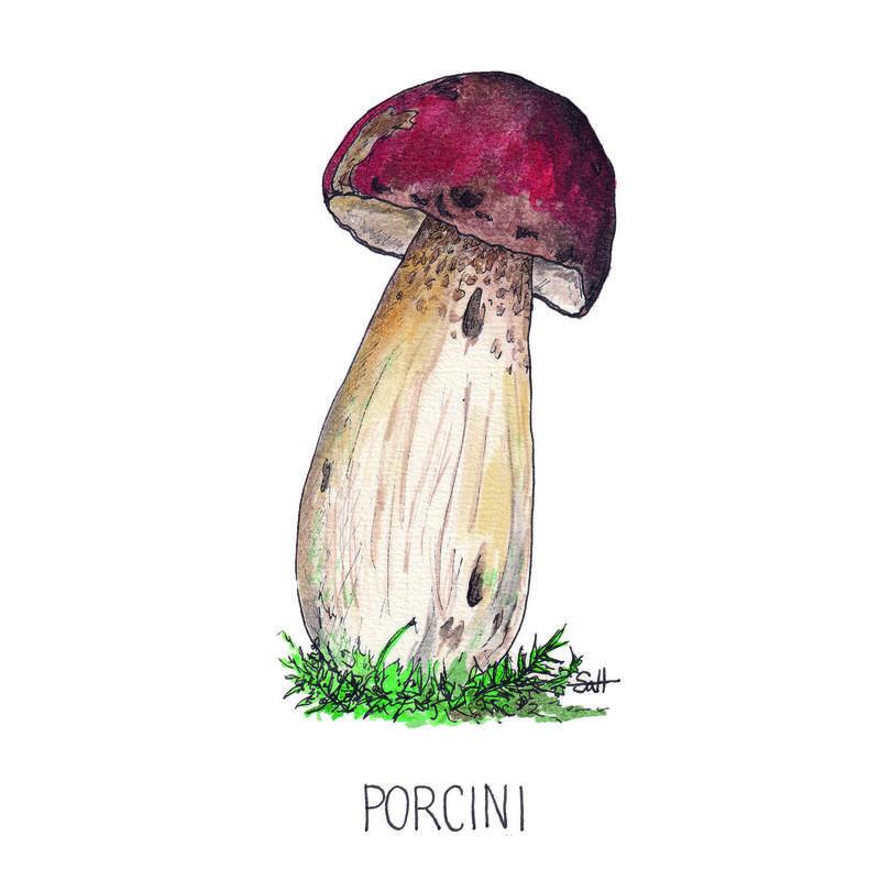 Pen & Ink Porcini Illustration - 21cm x 30cm - £32.50 (unframed) or £40 (framed)