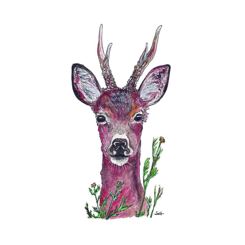 Pen & Ink Roe Deer Illustration - 21cm x 30cm - £32.50 (unframed) or £40 (framed)