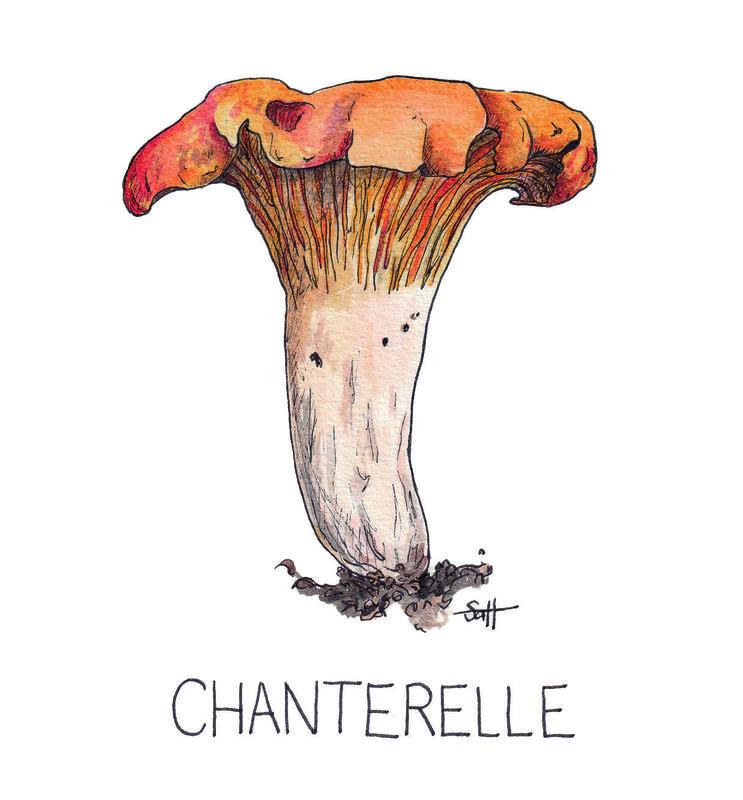 Pen & Ink Chanterelle Illustration - 21cm x 30cm - £32.50 (unframed) or £40 (framed)
