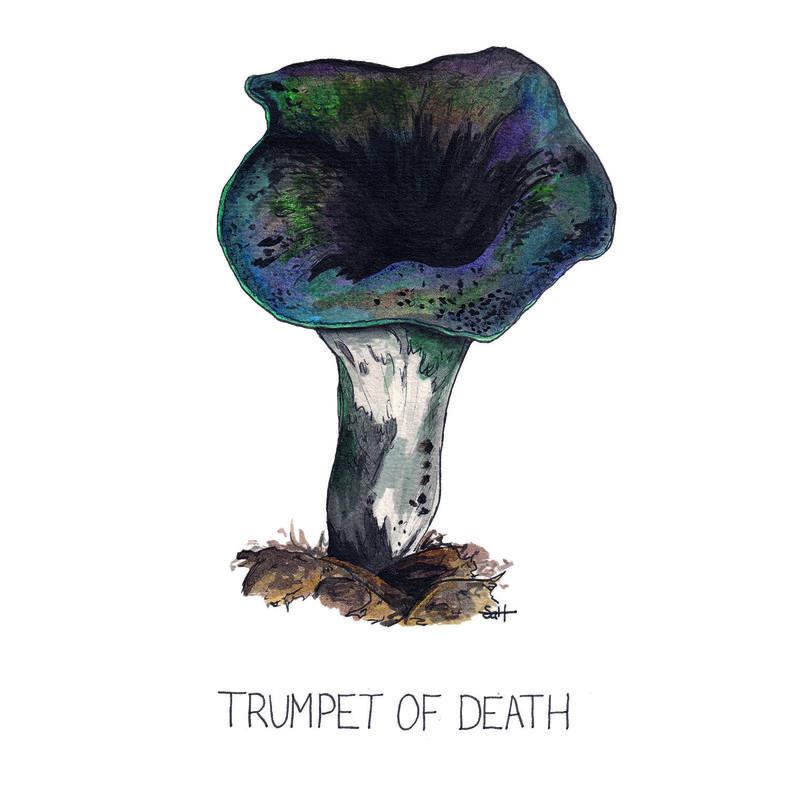 Pen & Ink Trumpet of Death Illustration - 21cm x 30cm - £32.50 (unframed) or £40 (framed)