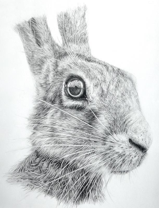 Spring: Hare II, graphite illustration