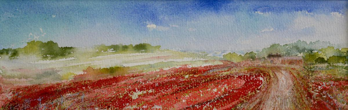 SOLD - The Track through the Poppy Fields, High Summer - Mixed Media painting, Image 37.5cm x 12 cm, Framed in white wood 52.5cm x 27cm, £95